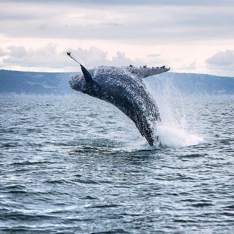 Look for humpback and orca whales, birds, sea otters and more