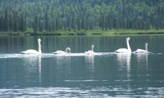 Alaska 25 Denali Southside River Guides