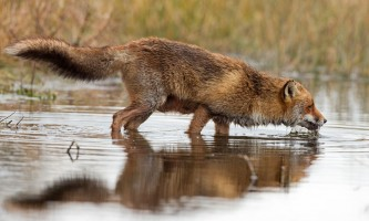 Fairbanks fountainhead wedgewood wildlife sanctuary WEDGEWOODRESORT ID13562 sanctuary 12schaeferfotografie