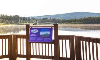 Fairbanks fountainhead wedgewood wildlife sanctuary WW SANC Alaska Org Listing 0013 7 3119 Fnthd Sanctuary 043