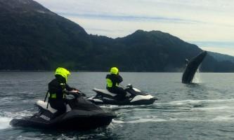 Glacier jetski adventures Whale with skis2019