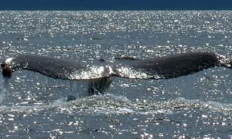 Glacier Wind Charters Icy Strait 01