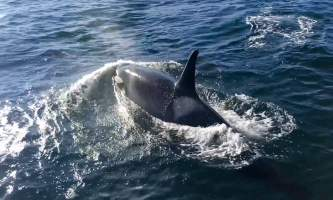 Glacier Wind Charters orca by boat