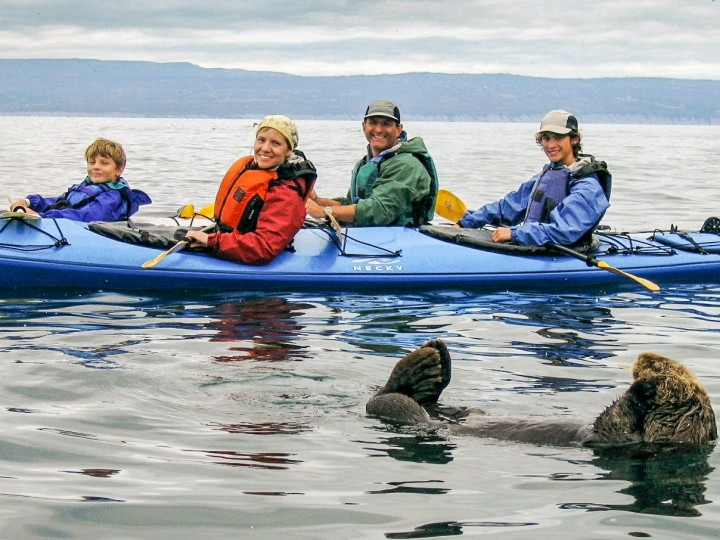 A family kayaks on the water while an otter plays close by.