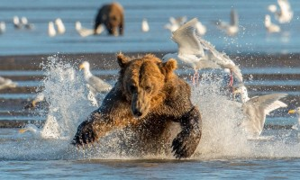 Alaska bear camp Cathy Hart Photography