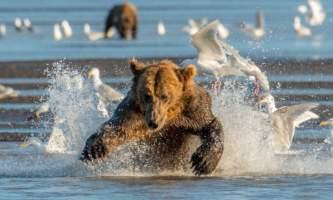 Alaska bear camp Cathy Hart Photography