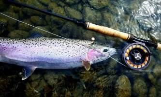 Great alaska adventure bucket list trip Trout connor