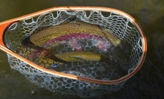 Hell bent fishing charters DSC 04592019
