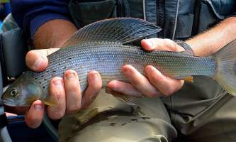 Hell bent fishing charters DSC 04782019