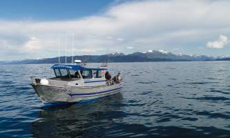 Homer ocean charters Diamond Cape