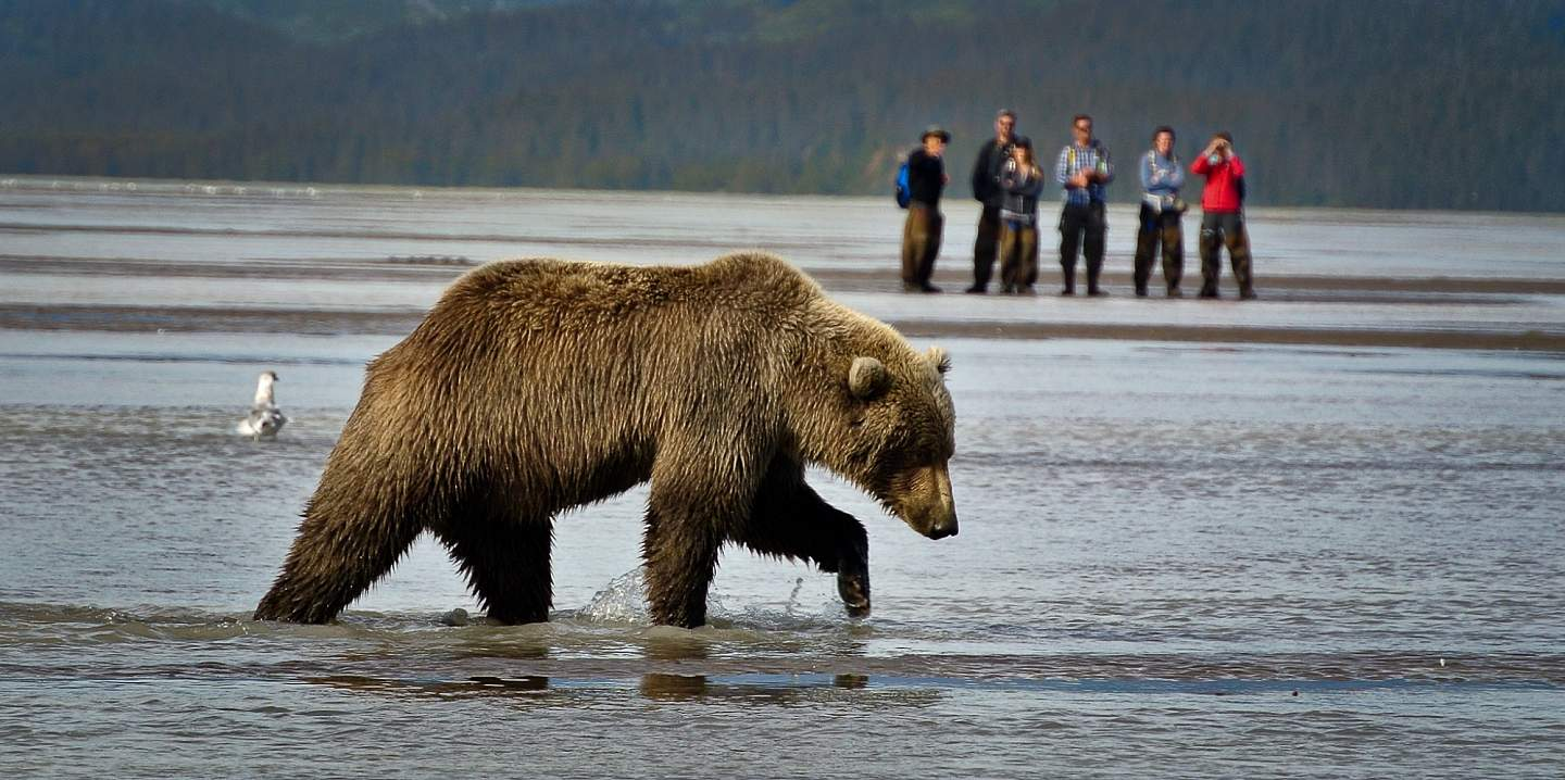 A group of people observe a brown bear from a distance.