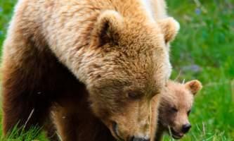 2016 kantishna wilderness trails 10 bears2019