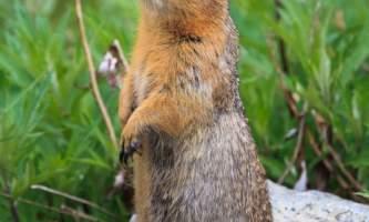 2016 kantishna wilderness trails 5 squirrel2019