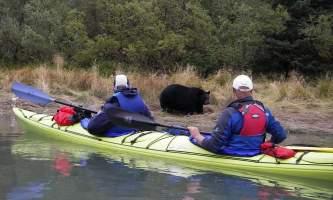 Kayak Adventures Worldwide bear addison lake2019