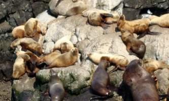 Kenai fjords tours Seward 0102019
