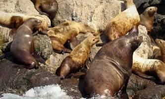 Kenai fjords tours Seward 0112019