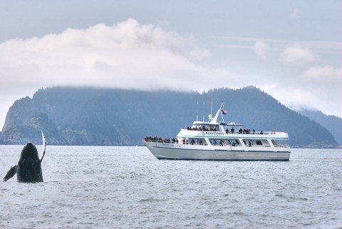 Smooth catamarans provide seating in the heated cabin with giant picture windows and large outdoor viewing decks