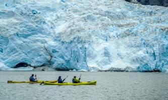 Alaska ANWE0013 aialik northwestern wildlife kayaking explorer