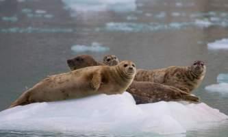 Major marine kenai fjords tours 3