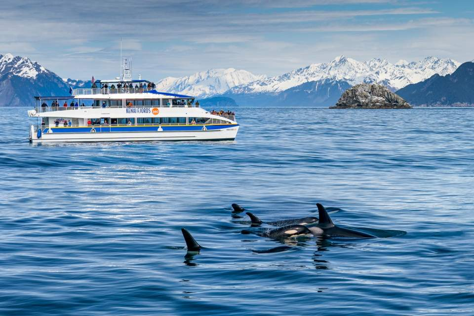 A day cruise ship sails close to whales in shimmering blue water with snow capped mountains in the background.