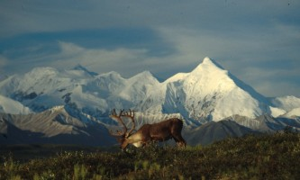 Narrated tour buses in denali national park Caribou Lunch Alaska Channel