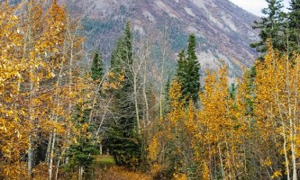 Northern AK Tour Co NATC 142019