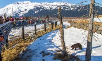 Northern exposure alaska sampler 169 bears trains conservation center 343 0 Original