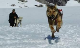 Northstar trekking glacier dog sled adventure 376902 3605327137321 881056809 n