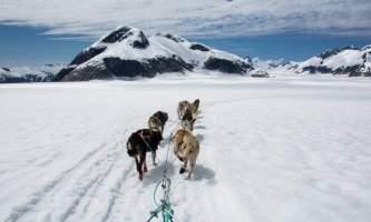 Northstar trekking glacier dog sled adventure CB3 9177