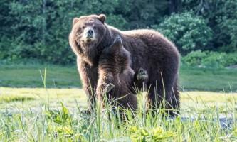 2018 Bears 14 c20172019
