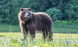 2018 Bears 42019