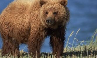 Pack Creek Bear Tours fortressofthebears 005 web gllry2019