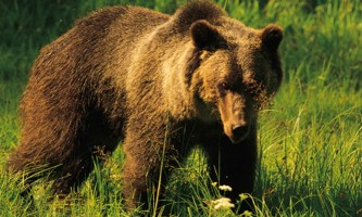 Pack Creek Bear Tours fortressofthebears 004 web gllry2019