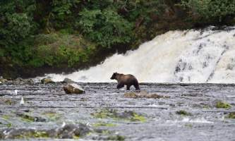 Pack Creek Bear Tours waterfall silouette2019