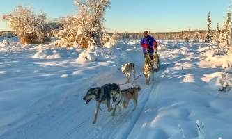 Leslie Paws for Adventure pics for Alaska Channel Nice Form Mushing school copy
