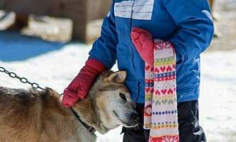 Leslie Paws for Adventure pics for Alaska Channel kids and dogs