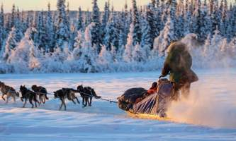 Leslie Paws for Adventure pics for Alaska Channel sled rides 1