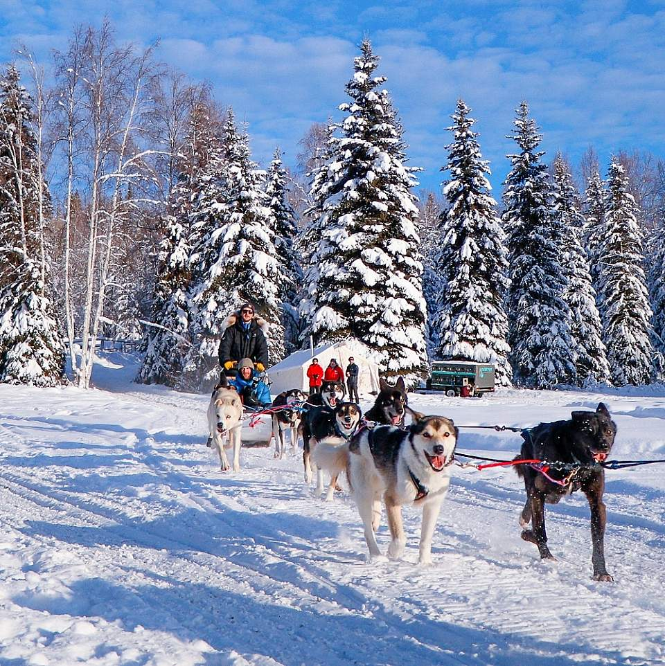 Leslie Paws for Adventure pics for Alaska Channel dogsled rides paws
