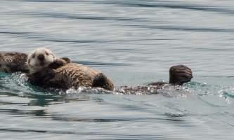 Stewarts Whittier 10 of 23 alaska phillips 26 glacier cruise