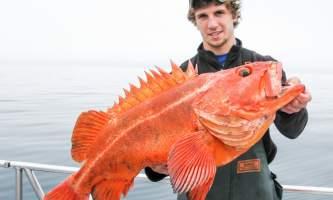 Steve Zernia Seward Yelloweye alaska profish n sea seward