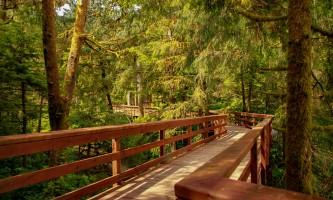 Rainforest sanctuary wildlife eagle center IMG 6047 002