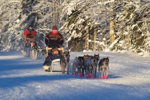 Mushers and their dogs sledding through the snow.