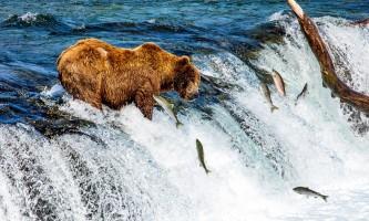 Regal air bearviewing bearcatchfish 2