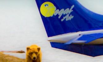 Regal air bearviewing EDITED 0833