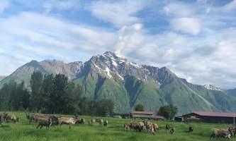 Reindeer Farm 16607778 C85 B 43 E4 B803 6 A628 D4 D282 E