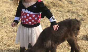 Reindeer Farm IMG 8111
