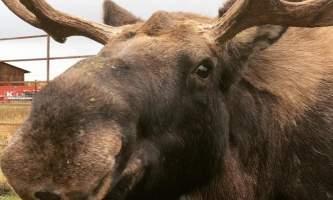 Reindeer Farm IMG 8116