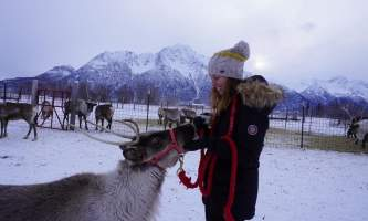 Reindeer Farm IMG 8118