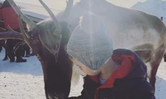 Reindeer Farm INLINE IMG 8113