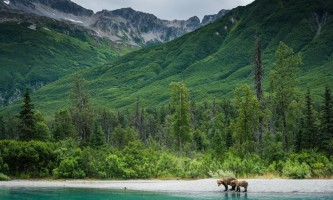 Jodyo photos 17 C0731 036 alaska rusts bear viewing anchorage
